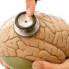 Fisioterapia en Salud Mental. Mucho más de lo que te piensas