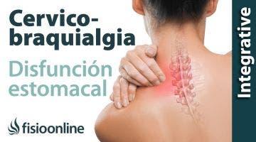 Cérvico-braquialgia Izquierda por disfunción de estomago. Plantas medicinales y remedios naturale