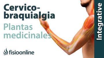 Cérvico-braquialgia derecha. Plantas medicinales y remedios naturales