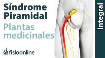 Plantas medicinales y remedios naturales para el S  piramidal derecho por próstata