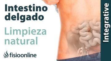 Alimentación, nutrición y consejos dietéticos para la disfunción de intestino delgado