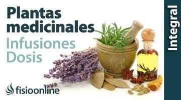 Tratamiento con plantas medicinales: Cómo hacer la infusión, dosis y duración de un tratamiento.