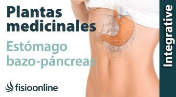 Todas las plantas medicinales para estómago y bazo-páncreas.