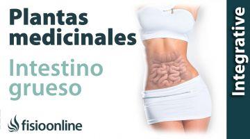 Todas las plantas medicinales para intestino grueso y pulmón