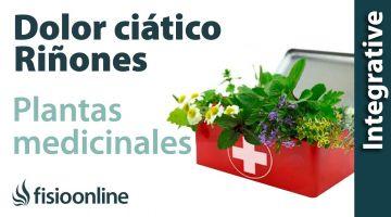 Ciática o ciatalgia izquierda por disfunción de riñón  Plantas medicinales y remedios naturales