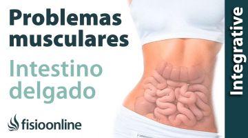 Intestino delgado:  problemas articulares y musculares que puede provocar