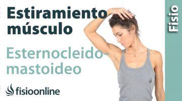 40 auto masaje para esternocleidomastoideos. (nuevo)