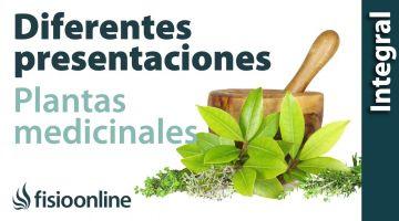 Diferentes presentaciones de las plantas medicinales.