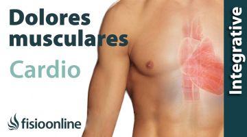 Palpitaciones y alteración cardiaca: problemas articulares y musculares que provocan