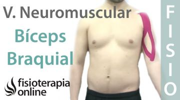 Cómo tonificar el bíceps braquial con vendaje neuromuscular