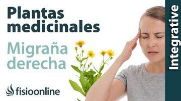 Cefalea y migraña o dolores de cabeza derechos. Plantas medicinales y remedios naturales.