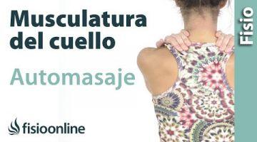 15.Auto-masaje cervical, de cuello, hombros y de trapecios.