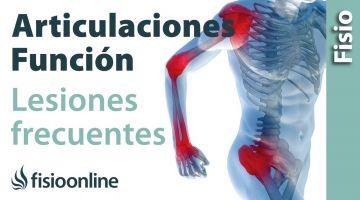 Articulación - Estructura, funcionamiento y lesiones más frecuentes