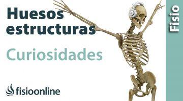 Huesos - Estructura, funcionamiento y curiosidades