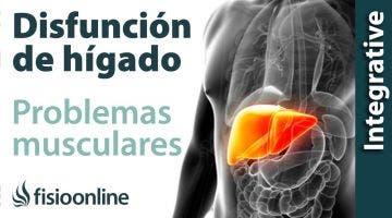 Hígado:  problemas articulares y musculares que puede provocar
