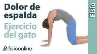 Ejercicio para el dolor de espalda  Ejercicio del gato