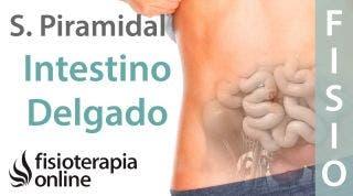 Síndrome del músculo piramidal derecho y su relación con el intestino delgado