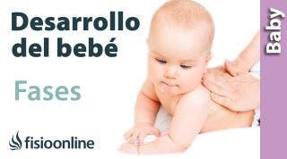Fases del desarrollo del bebé