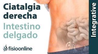Ciática o ciatalgia derecha y su relación con el intestino delgado