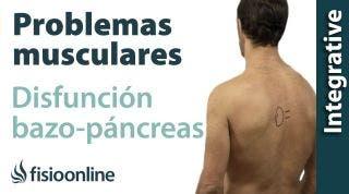 Bazo-Páncreas: problemas articulares y musculares que pueden provocar