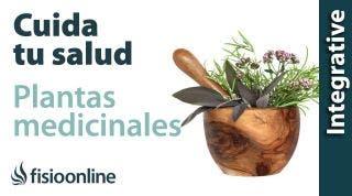 Cuida tu salud y tu espalda con plantas medicinales.