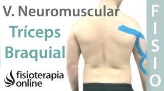 Cómo relajar el tríceps braquial con vendaje neuromuscular