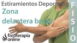 Estiramientos deportivos para relajar la zona delantera del brazo y antebrazo