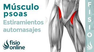 Músculo Psoas. Cómo afecta a tus lumbares y cómo puedes tratarlo con ESTIRAMIENTOS y AUTOMASAJES