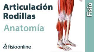 La rodilla  Anatomía, huesos, ligamentos, movimientos y articulaciones