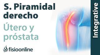 Síndrome del músculo piramidal derecho y su relación con el útero y próstata