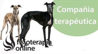 El animal como compañía terapéutica .Galgos y Podencos