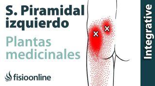 Plantas medicinales y tratamiento natural para el síndrome del músculo piramidal izquierdo