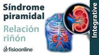 Síndrome del músculo piramidal izquierdo y su relación con el riñón