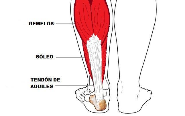 funcion de los gemelos de la pierna