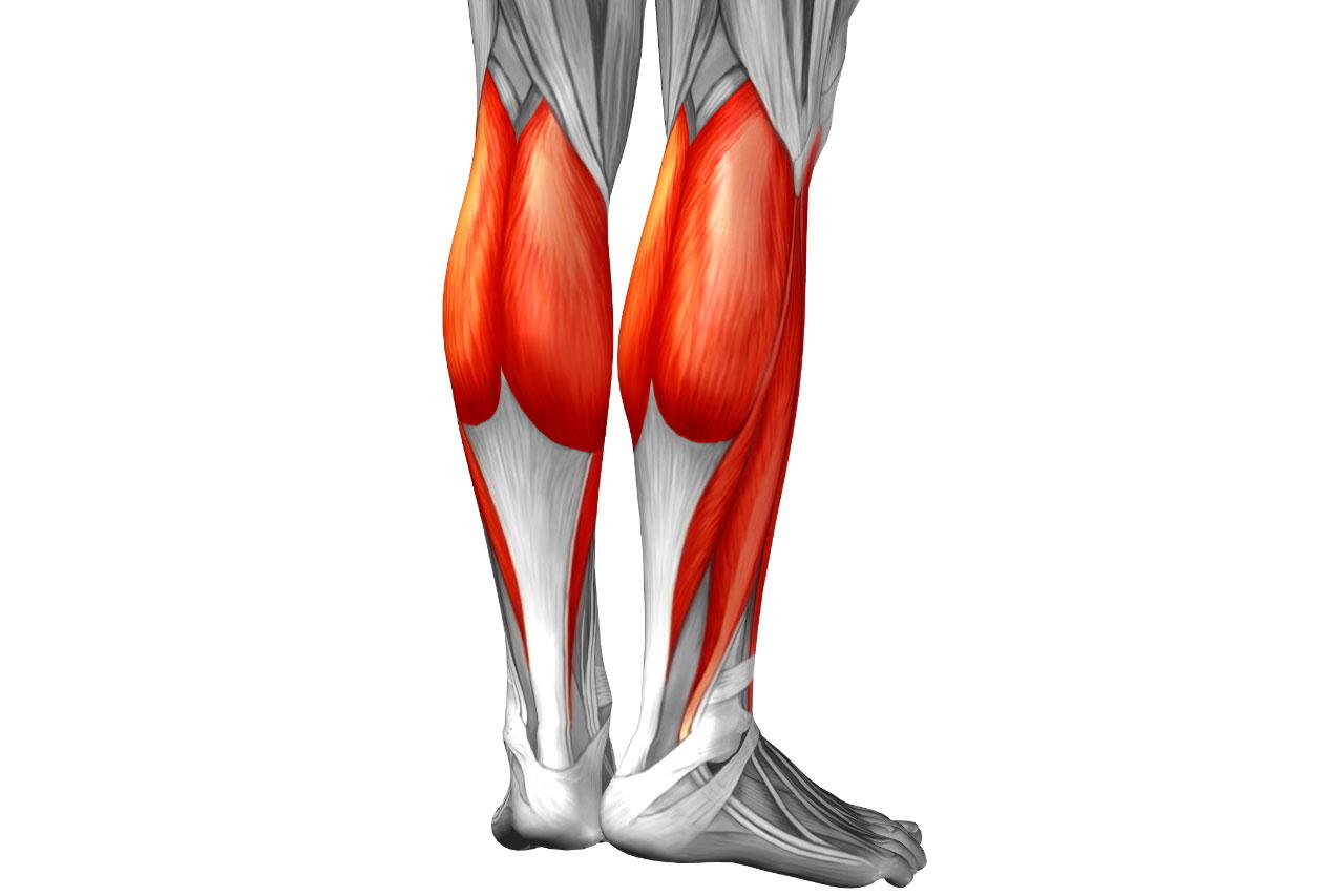 anatomía de los músculos gemelos y sóleo