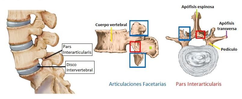 anatomia de la vertebra lumbar (pars interarticularis)