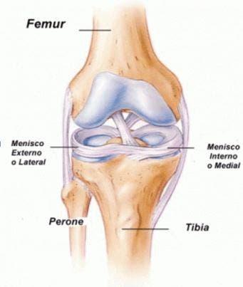 Exploración capsulo-ligamentosa de la rodilla | Fisioterapia Online
