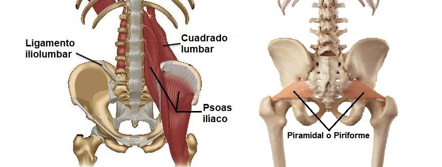 músculos involucrados en el dolor de cintura