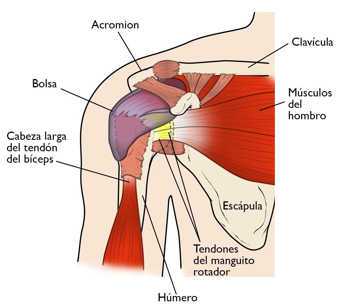Manguito rotador cirugía