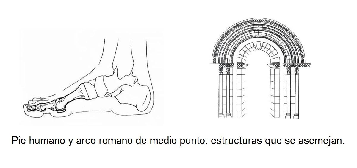 El Pie Su Estructura Sus Arcos Y Los Tipos De Pies Según